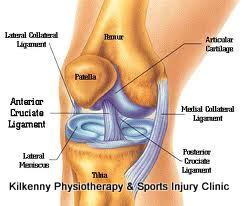 Knee Joint